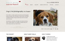 Sussex Dog Photography